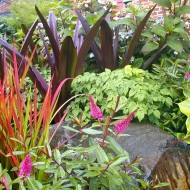 Perrenial Garden with Japanese Maple - Designing with Color