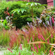 Perrenial Garden with Japanese Maple - Tall Grasses