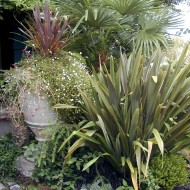 Tropical Woodland Garden with Large Vase