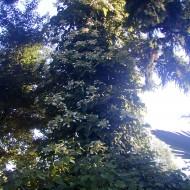 Tree in Woodland Garden in Portland, Oregon