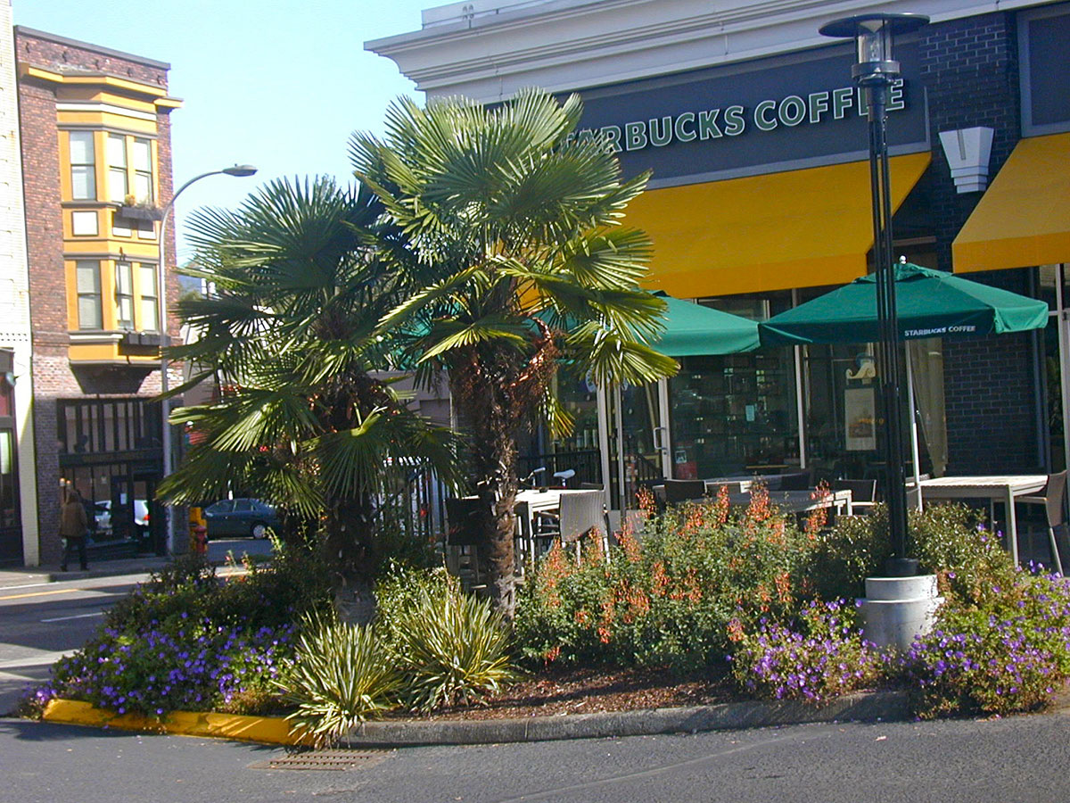 Commercial Landscape - Once a Blockbuster, Now a Starbucks