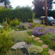 Mediterranean Gravel Garden with Stone Path