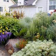 Mediterranean Rock Garden - Pebble Ground Cover