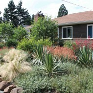 Drought-Tolerant Garden, Yucca and Boulders
