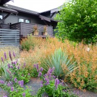 Native Garden with Pebbles - Portland, Oregon