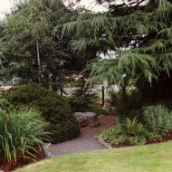 General Pruning - Woodland Path and Trees