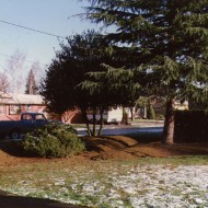 General Tree Pruning Project