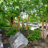 Native Garden with Trees and Rocks