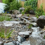 Pondless Stream with Rocks