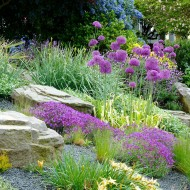 Rock Garden with Purple Flowers