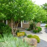 Drought Tolerant Garden with Gravel