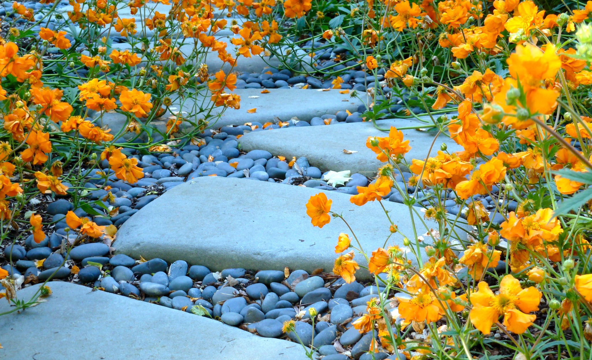 Paths Featured Image